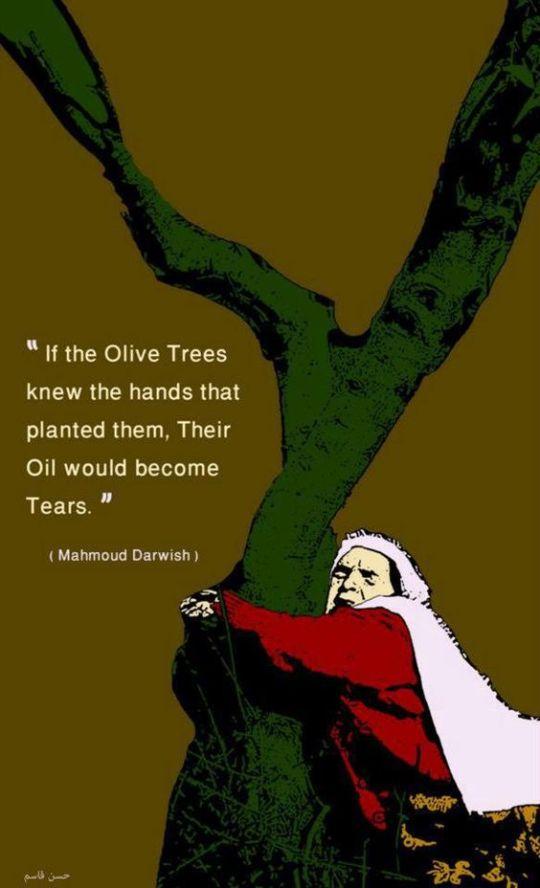 PI=Olive