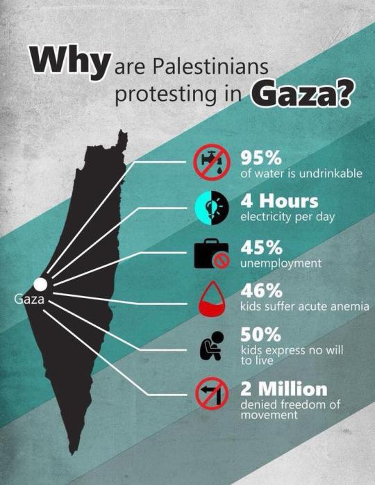 Why are palestinians